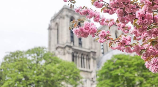 Cerisiers et images de Paris